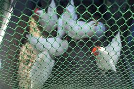 What You Need to Know About Plastic Mesh Poultry Netting