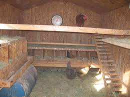 How So Setup Electric Poultry Netting In Winter